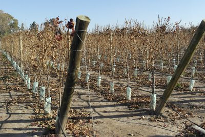 One of the vineyards we visited - not exactly growing season
