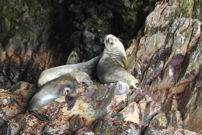 Sea Lions lounging