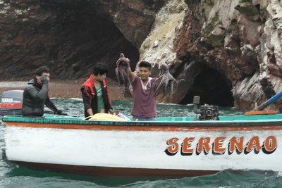Fishermen catching octopi