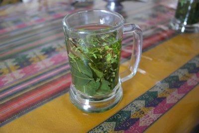 Some coca and munia tea for the altitude
