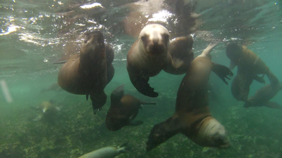 The baby sea lions were all so cute!