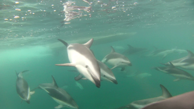 Amazing group of dolphins that swarmed our boat on our way back