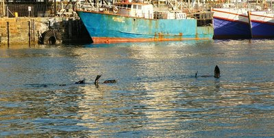 Seals cooling off in Cape Town harbour