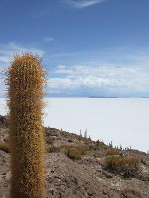 Isla Pescado, Salt flats