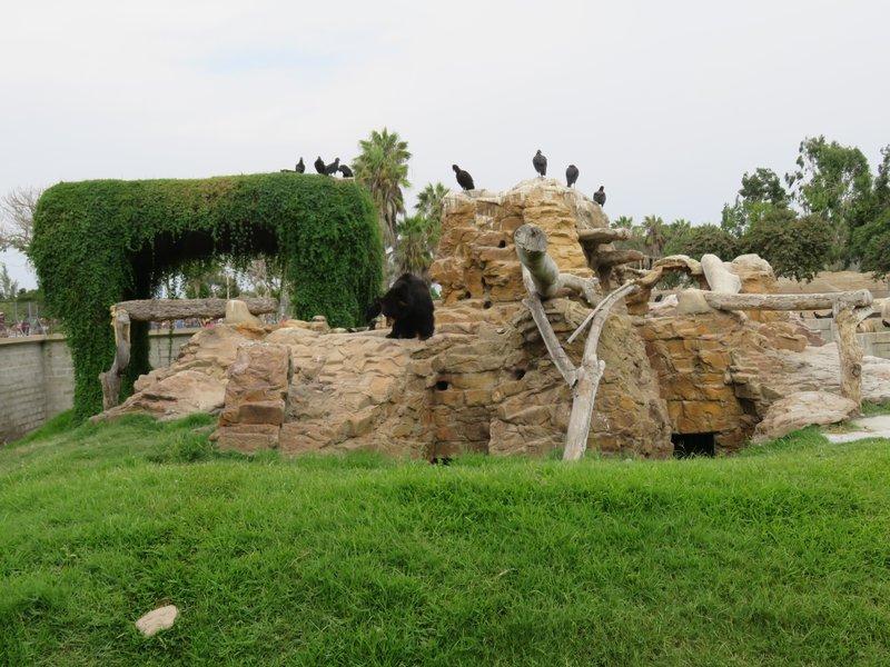 Lima Zoo