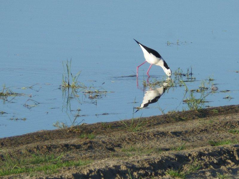 Stilt at Lake Indoon