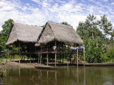 jungle_house