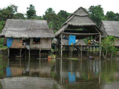 jungle_waterhouse