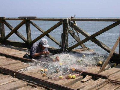 pimentel_fisherman