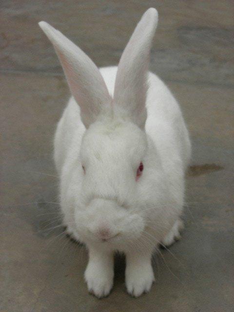 Lima_conejo box