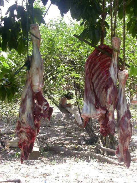 amboro_dorpje kalfsvlees