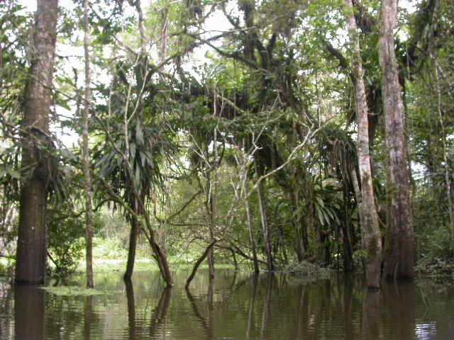 jungle_waterforest