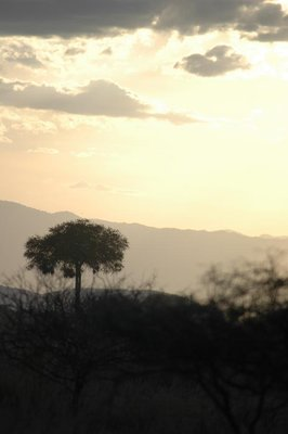 tarangire_sepia sunset