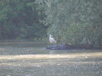 Donaudelta, ein Vogelparadies