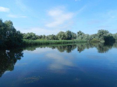 Schilf im Donaudelta