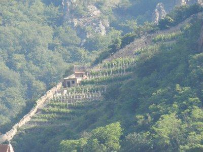 Weinbau in Dürnstein