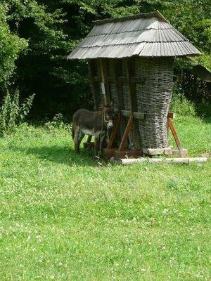 Donkey in shade