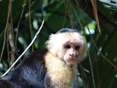 Costa Rica 3 157
