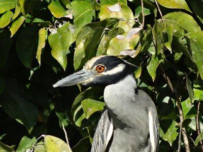 Costa Rica 3 194