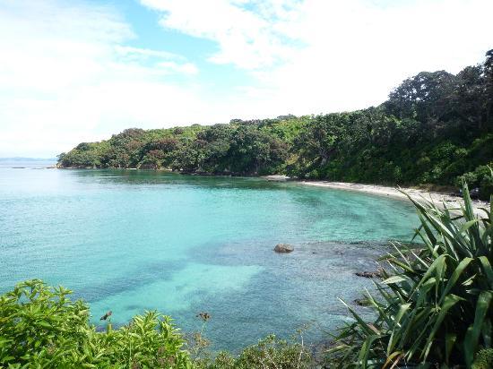 tiritiri-matangi-island