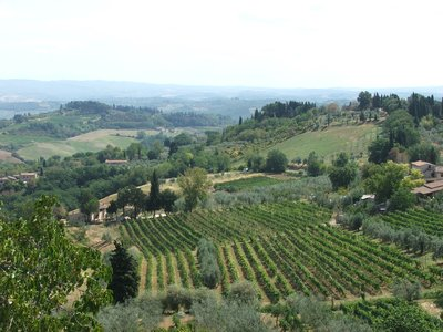 Tuscany....where I picked grapes:)