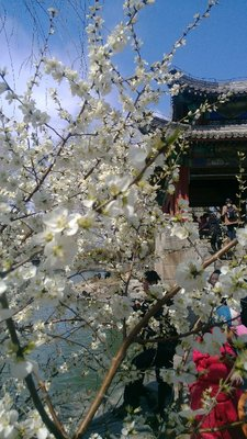 Flowers of Kunming Lake