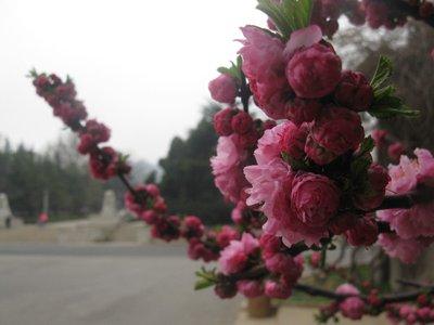 Dalian Flowers
