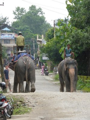 Chitwan city center road