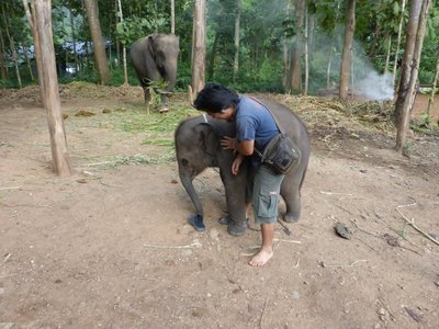 Ware playing with Dumbo