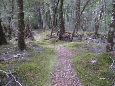 Walk scenery in Haast pass