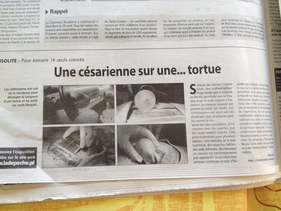 30 Local news_Tortois c -section!