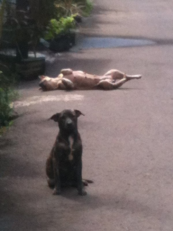 Even the dogs here know how to chill out