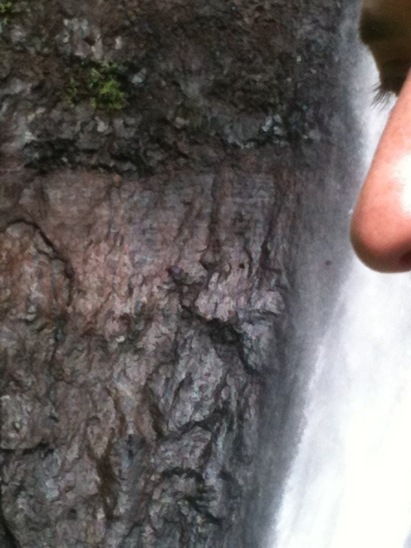 Volcanic rock or Justin's nose?