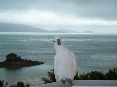 View from Hamilton Island Hotel