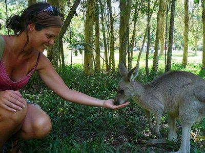 Aus - Zoo Em and Kangaroo