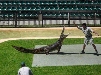 Aus - Zoo Croc show