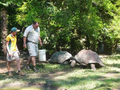 Aus - Zoo Tortoise