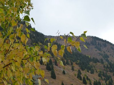 Autumn in Almaty's mountains