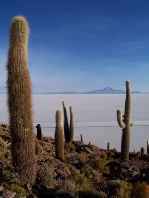 Cactus on Salar de Uyuni