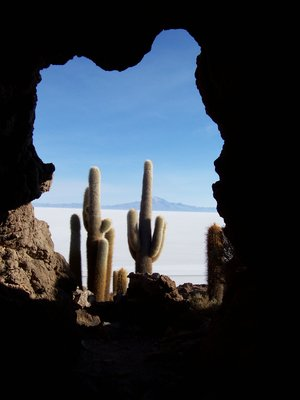 Cactii on Salar de Uyuni