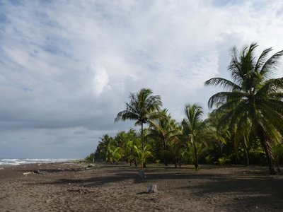 Beach in Tortuguero National Park