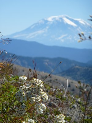 Mount Adams, Washington