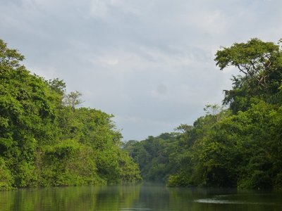 Tortuguero Rainforest