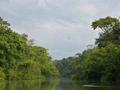 Tortuguero Rainforest