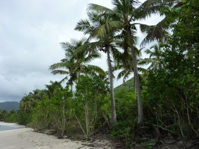 Palm Trees at Smuggler's Cove Beach