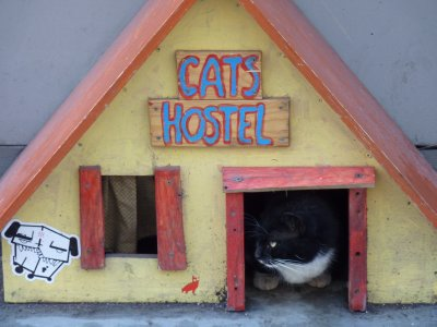 Cats Hostel, Riga