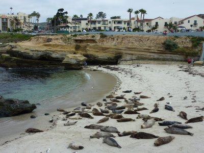 La Jolla seal colony, San Diego