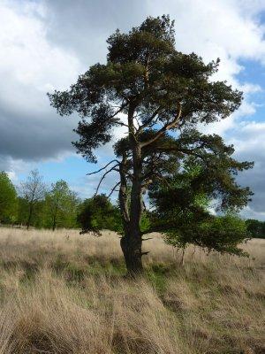 Drents-Friese Wold National Park, Drenthe