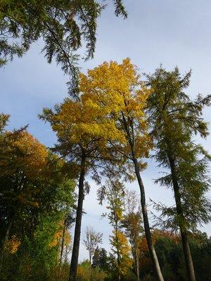 Twente Autumn Colours