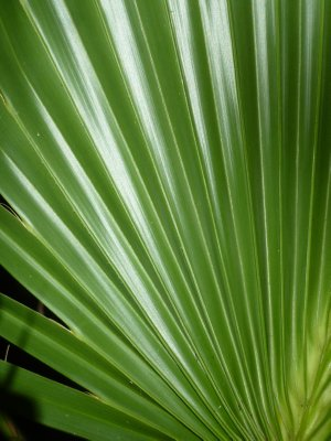 Everglades Leaf